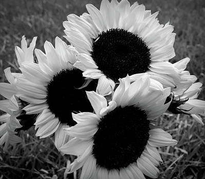 Photograph - Black And White Sunflower Bouquet by Aimee L Maher ALM GALLERY