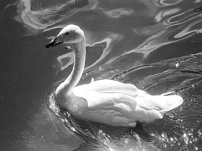 Swan Photograph - Black And White Swan, Style Oil Painting by Nat Air Craft