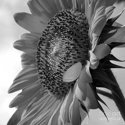 Artist Christine Belt Photograph - Black And White Top Of The Morning by Christine Belt