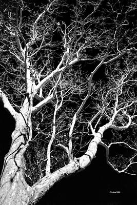 Photograph - Black And White Tree Art IIi by Christina Rollo