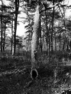 Black And White Tree In The Pines 2 Original