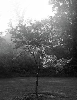 Photograph - Black And White Tree Portrait by Dan Sproul