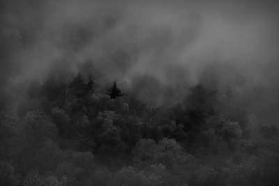 Photograph - Black And White Trees In Fog by Dan Sproul
