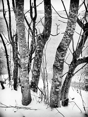 Photograph - Black And White Trees by Karen Stahlros