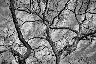 Photograph - Black And White Trunks by Elenarts - Elena Duvernay photo
