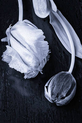 Exotic Soft Photograph - Black And White Tulips by Garry Gay