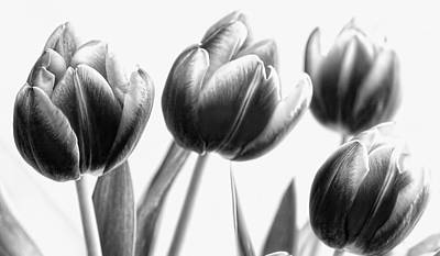 Photograph - Black And White Tulips by Gina Cormier
