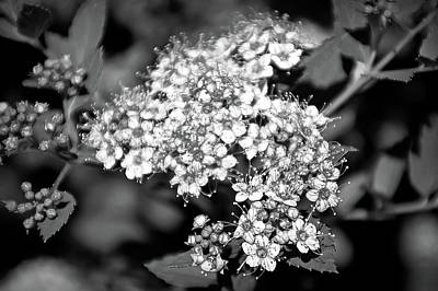 Photograph - Black And White Twinkle by Aimee L Maher Photography and Art Visit ALMGallerydotcom
