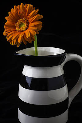Gerbera Daisy Photograph - Black And White Vase With Daisy by Garry Gay