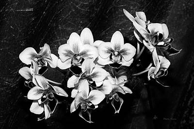 Photograph - Black And White Velvet by Phyllis Denton