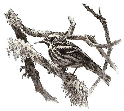 Black-and-white Warbler Art Print