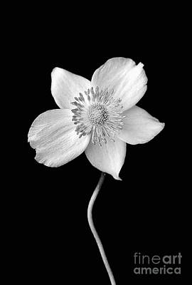 Photograph - Black And White Wildflower by Darren Fisher