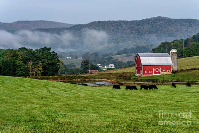 Photograph - Black Angus And Barn by Thomas R Fletcher