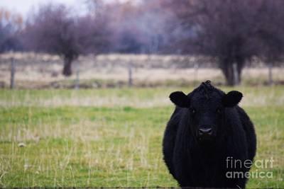 Black Angus Art Print by LKB Art and Photography