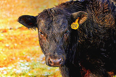 Photograph - Black Angus Pizzazz by Carol Montoya