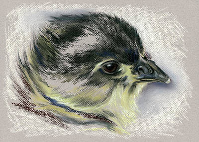 Pastel - Black Australorp Chick Portrait by MM Anderson
