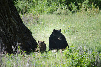 Photograph - Black Bear And Cub by Crystal Wightman