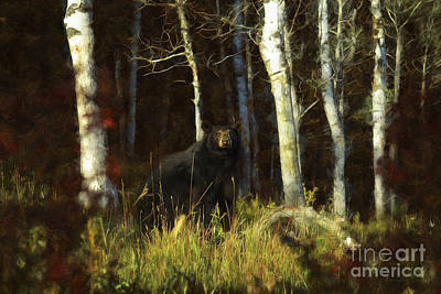 Fall Photograph - Black Bear - Autumn Stare by Wildlife Fine Art
