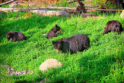 Photograph - Black Bear Brunch by Greg Norrell