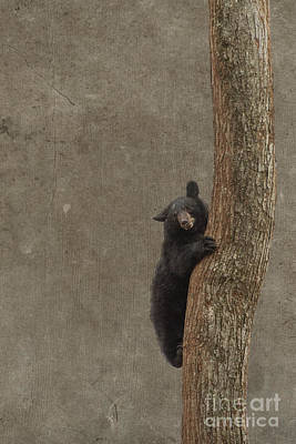 Photograph - Black Bear Climbing by Dan Friend