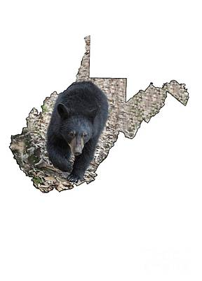 Photograph - Black Bear Coming Close by Dan Friend