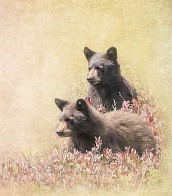 Photograph - Black Bear Cubs by Angie Vogel