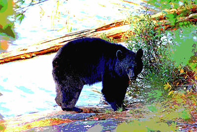 Photograph - Black Bear by Debbie Oppermann