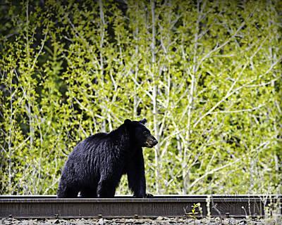 Photograph - Black Bear by Edward Kovalsky