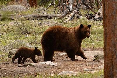Mark Wagner Wall Art - Photograph - Black Bear Family - Rocky Mountain Nat. Park Co by Mark Wagner