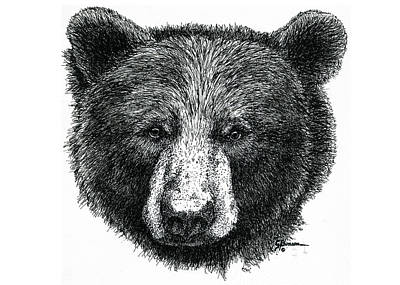 Yellowstone Drawing - Black Bear by George Bumann