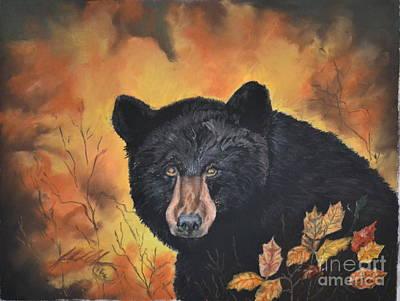 Black Bear Original