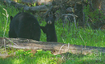 Photograph - Black Bear Sow And Cub-signed-#8913 by J L Woody Wooden
