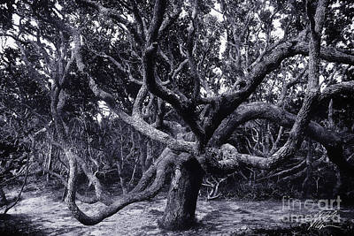 Photograph - Black Beard Tree by Tony Cooper