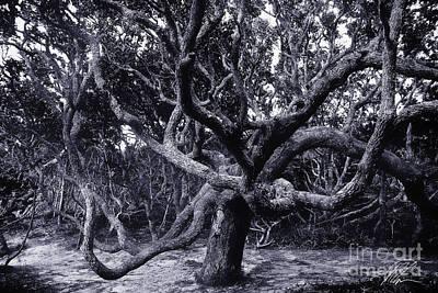 Photograph - Black Beard Tree by Tony Cooper