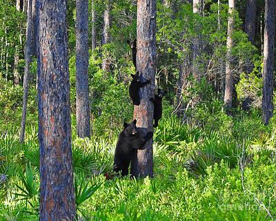 Photograph - Black Bears by Al Powell Photography USA