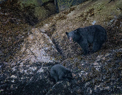 Photograph - Black Bears Seafood Buffet by Randy Hall