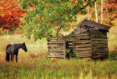 Photograph - Black Beauty by Amber Kresge