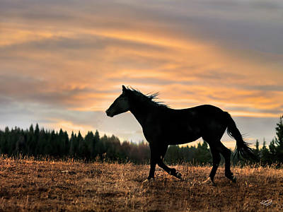 Wild Photograph - Black Beauty At Sunset by Leland D Howard