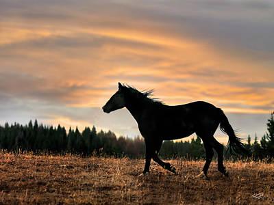 Photograph - Black Beauty At Sunset by Leland D Howard