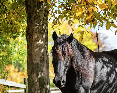 Photograph - Black Beauty Autumn by Joann Long