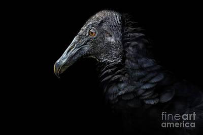 Digital Art - Black Beauty by Bettina Dittmann