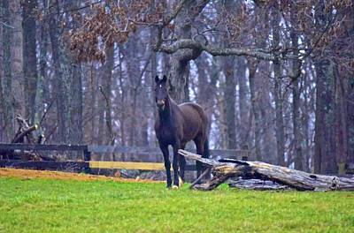 Photograph - Black Beauty by Tracy Rice Frame Of Mind