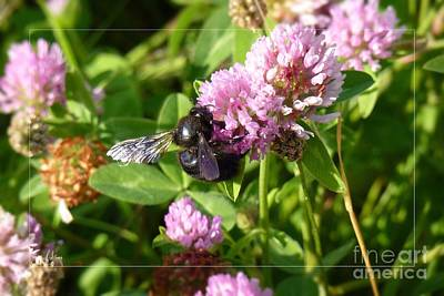 Black Bee On Small Purple Flower Art Print