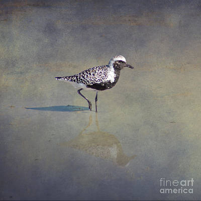 Tropical Birds Photograph - Black-bellied Plover By Darrell Hutto by J Darrell Hutto