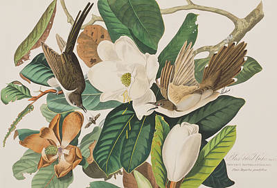 Cuckoo Painting - Black Billed Cuckoo by John James Audubon