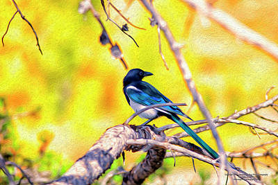 Magpies Digital Art - Black-billed Magpie by Christopher Eng-Wong