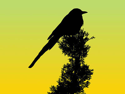 Drawing - Black-billed Magpie Silhouette - Special Request Background by Marcus England
