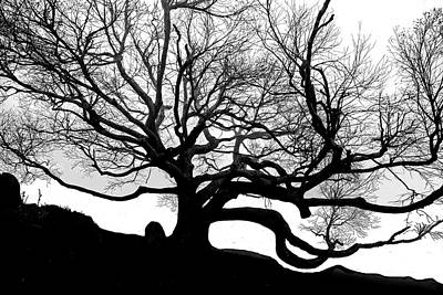 Photograph - Black Birch Silhouette 2009 05 by Jim Dollar