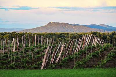 Photograph - Black Birch Vineyard And Summit House View by Sven Kielhorn