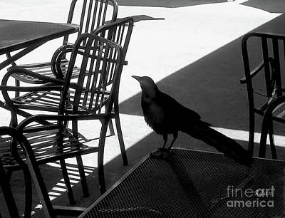 Photograph - Black Bird At Central Market Bw by Felipe Adan Lerma